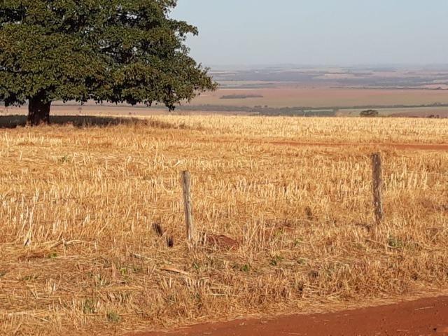 Fazenda de 28 alqueires ( 135 hectares ) Paraúna-GO ( soja ) - Foto 3