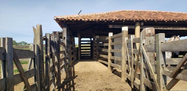 Fazenda a venda no extremo sul da bahia 170 ha - Foto 18