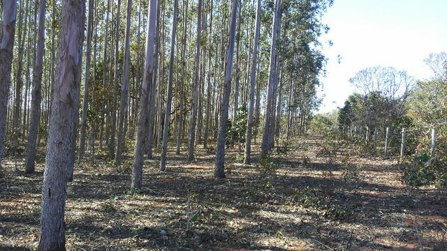 Chácara 14 km de Campo Grande - 9,8 hectares - Foto 3