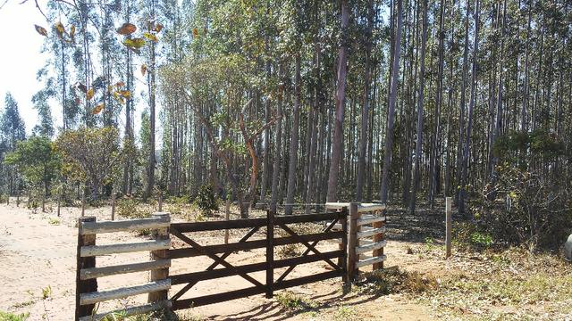 Chácara 14 km de Campo Grande - 9,8 hectares - Foto 2