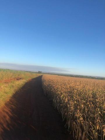 [Fazenda Top em Lavoura] 33,5 Alq. Inaciolândia-GO - Foto 4