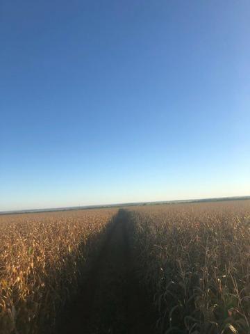 [Fazenda Top em Lavoura] 33,5 Alq. Inaciolândia-GO - Foto 11