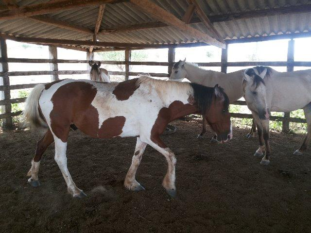 Fazenda 172 tarefas de terra com sede para criaçao de gado e cavalo e plantaçao - Foto 7