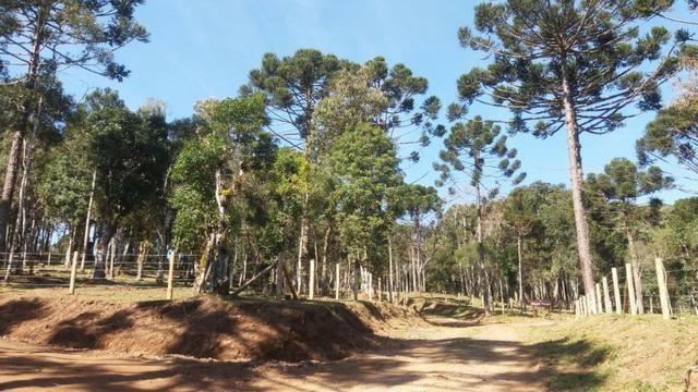 Terreno em Avenquiha - Campo Alegre, 30.000 m.² - Foto 4