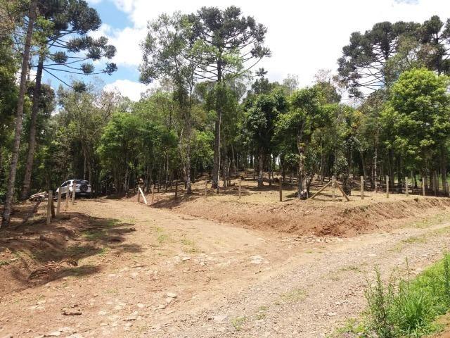 Terreno em Avenquiha - Campo Alegre, 30.000 m.² - Foto 13