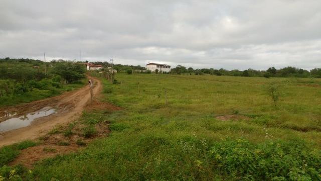 Ótima fazenda pitombeira em vertentes, com 161 hectares - Foto 6