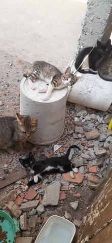 Adoção de gatinhos - Foto 4