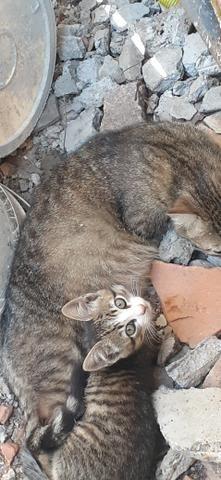 Adoção de gatinhos - Foto 6