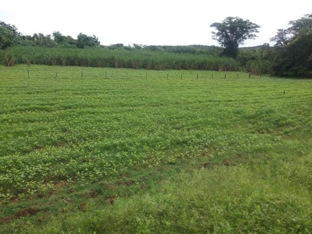 Jequitiba!! Linda fazenda de 33,4 ha WhtsAPP * Guilherme - Foto 8