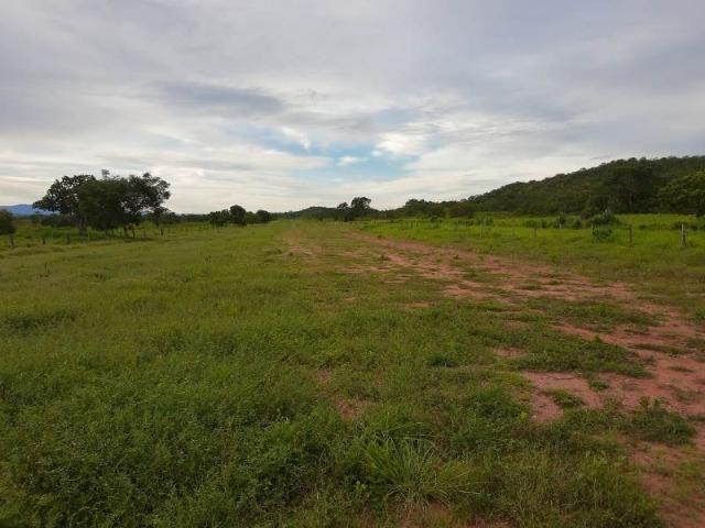 2.200 alqs Solo Argiloso Região De Chuva Palmeirópolis TO - Foto 14