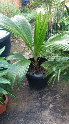 Plantas no vaso (promoção)  - Foto 4