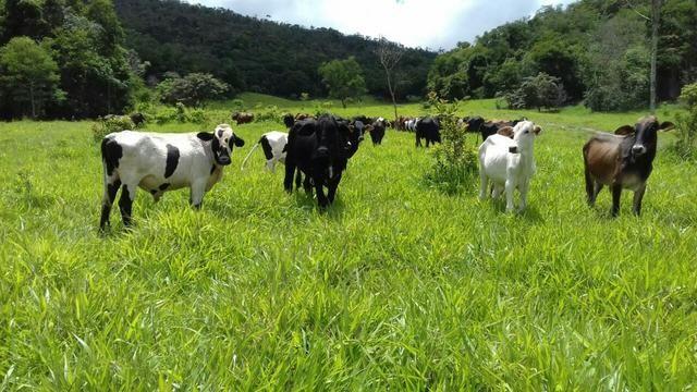 Fazenda em Itaipé - Minas Gerais