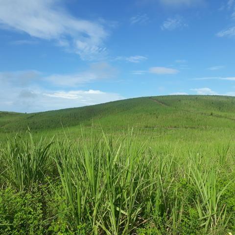 Vendo propriedade 40 km de Maceió - Foto 5