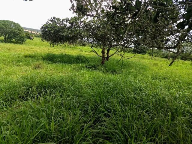 Fazenda em Ribeira do Pombal - Foto 20