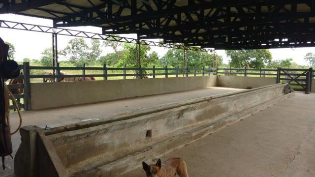 Chácara na Guia - Foto 6