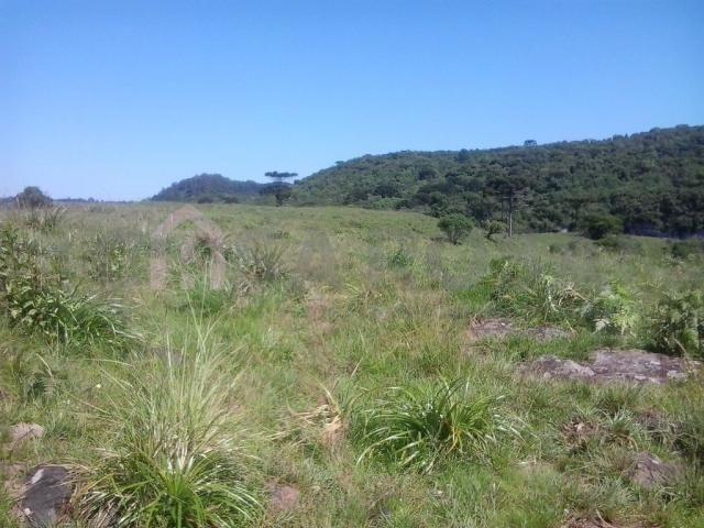Terreno à venda em Fazenda souza, Caxias do sul cod:298 - Foto 4