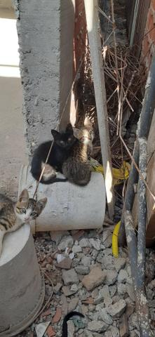 Adoção de gatinhos - Foto 2