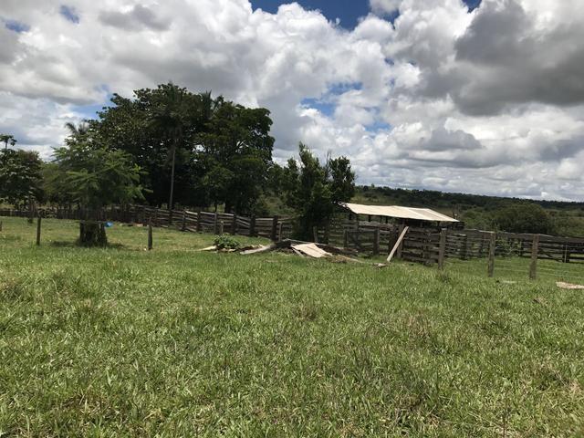 Fazenda 363 hectares - Foto 10