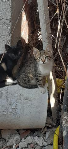 Adoção de gatinhos - Foto 5