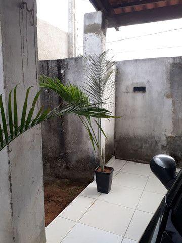 Palmeira grandes e médias. - Foto 5