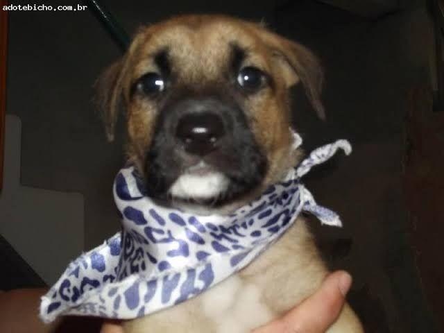 Labrador x dog  - Foto 3