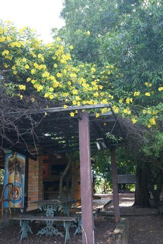 Fazenda 70 hectares á venda á 16km de Cuiabá - Foto 12