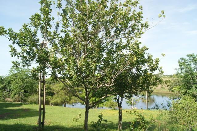 Fazenda 70 hectares á venda á 16km de Cuiabá - Foto 11