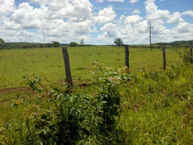 1270 hectares. Terra de Furmas, 100% pecuária - Foto 4