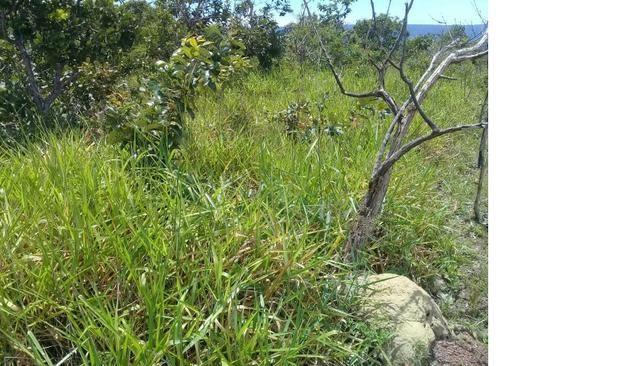 Galinha Morta, 1200 Hectares,500 Reses,Trator, porteira Fechada, Alto Paraguai ?MT - Foto 2