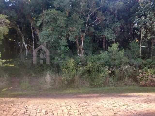 Terreno à venda em Ana rech, Caxias do sul cod:905