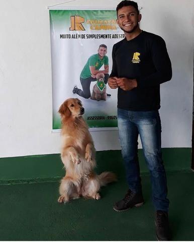 Adestramento Domiciliar - Foto 4