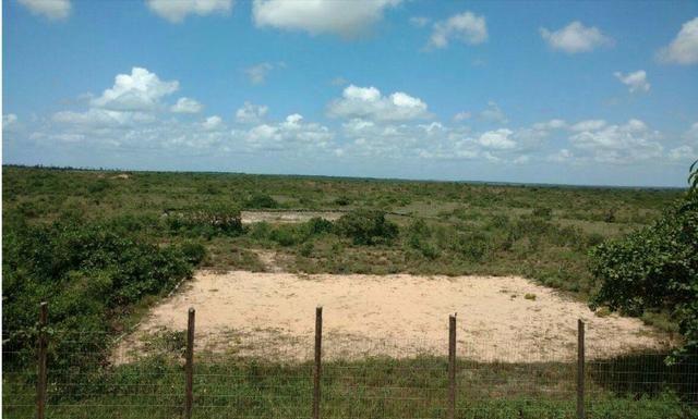 Fazenda com 41 hectares de 600,000,00 por 400.000,00 4k da entrada de Muriú - Foto 8