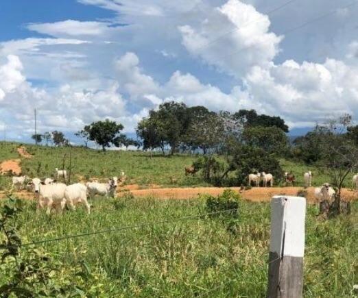 FAZENDA no MUNICÍPIO de BURITIS MG, Com 2.203 hectares
