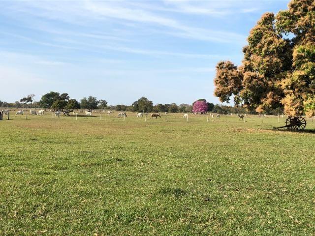 Fazenda 1.200 hectares á venda em Poconé MT