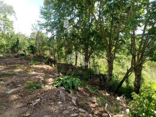 Terreno à venda em Vale dos vinhedos, Bento gonçalves cod:9889732 - Foto 7