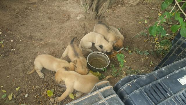 Cachorro doaçao - Foto 2