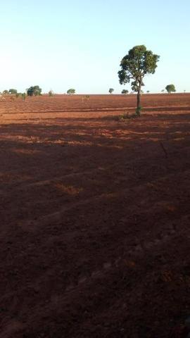 Fazenda 363 hectares - Foto 8
