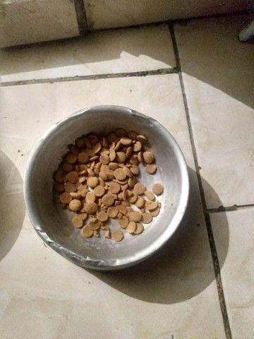 Vendo 2 pote de comida e água pra cachorro eu quero 50 reais nos 2  - Foto 5