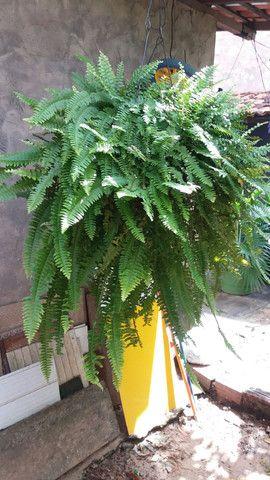 Plantas no vaso (promoção)