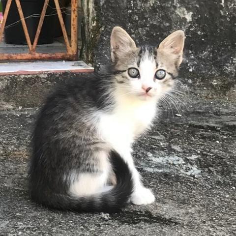 Uma gatinha pra você