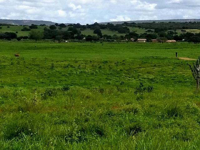 Fazenda em Ribeira do Pombal - Foto 17