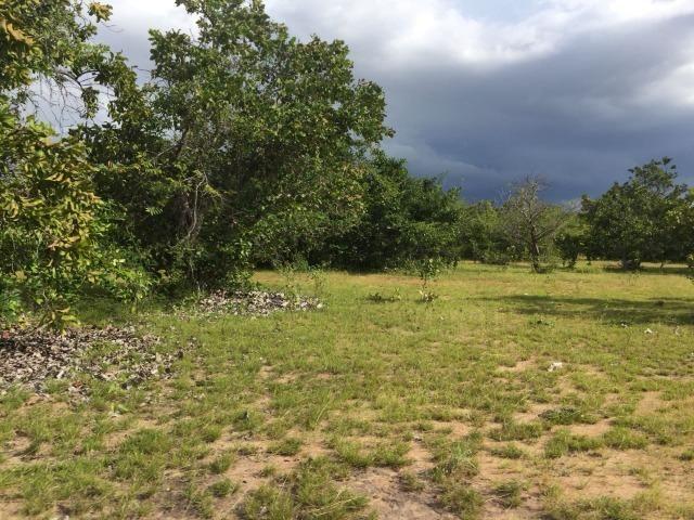 Fazenda com 450 hectares no município do Alto Alegre/RR, ler descriçao do anuncio - Foto 4