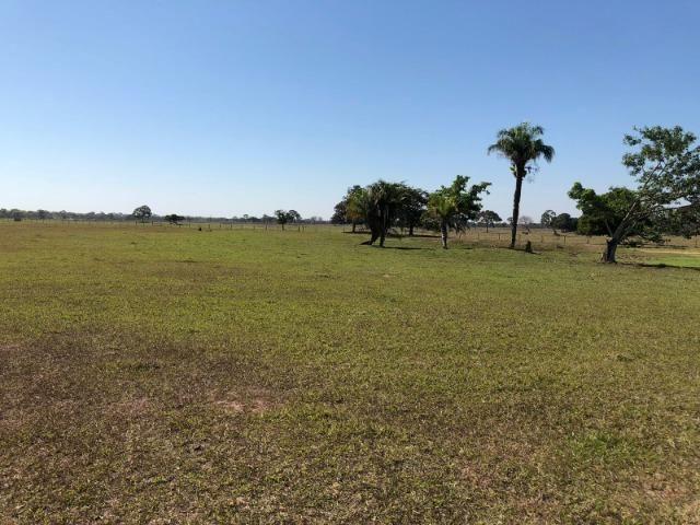Fazenda 1.200 hectares á venda em Poconé MT - Foto 4