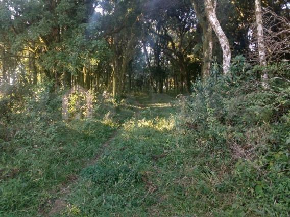 Terreno à venda em Ana rech, Caxias do sul cod:905 - Foto 2