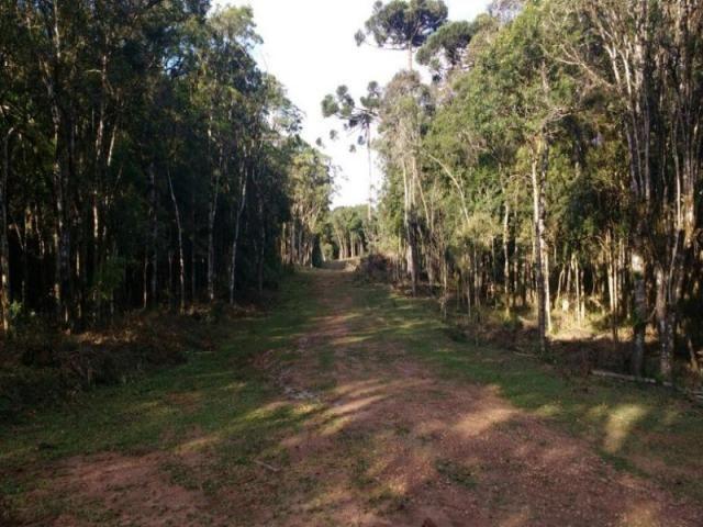 Chácara rural à venda, borda do campo, são josé dos pinhais. - Foto 5