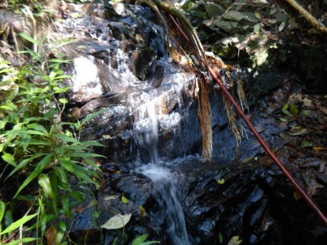 Terreno 15 alqueires - Foto 10