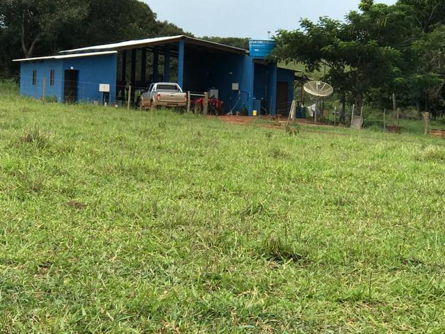 Fazenda 363 hectares - Foto 6
