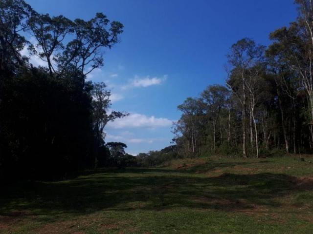 Chácara rural à venda, borda do campo, são josé dos pinhais. - Foto 9