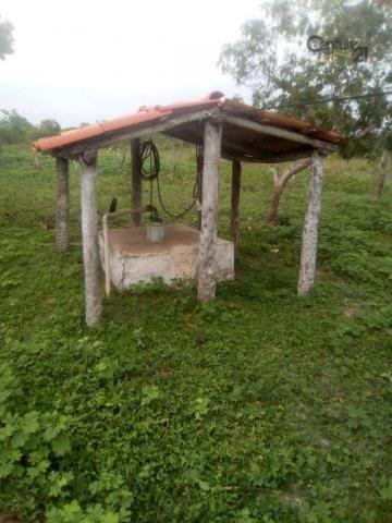 754 há em Barras Piauí - Foto 5