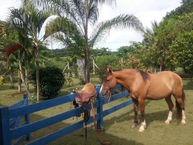 Jequitiba!! Linda fazenda de 33,4 ha WhtsAPP * Guilherme - Foto 11